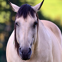 Equine Medical Funding